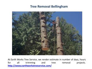 Fruit Tree Pruning Bellingham