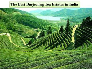 The Best Darjeeling Tea Estates in India
