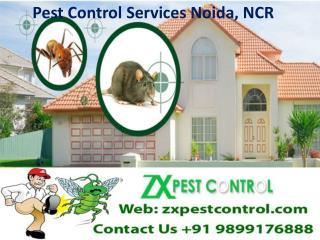 Pest Control Services Noida, NCR Call 9899176888