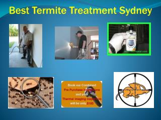 Best Termite Treatment Sydney