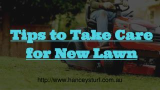 Tips to take care for new lawn!!