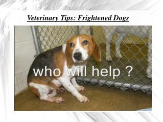 TruCare Pharmacy Veterinary Tips: Frightened Dogs