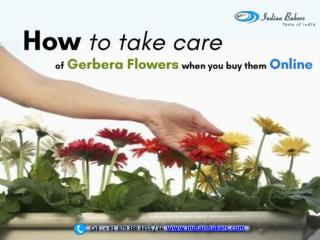 How to take care of Gerbera Flowers when you buy them online?