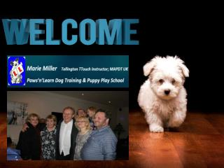 Dog And Puppy Training Classes in Nuneaton By Paws n Learn, UK