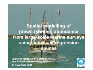 Spatial modelling of  prawn shrimp abundance  from large-scale marine surveys using penalised regression splines