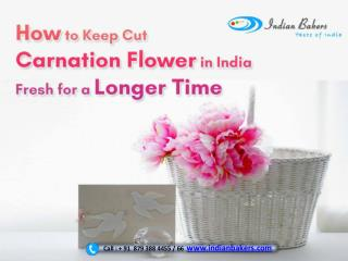 How to keep cut carnation flower in India fresh for a longer time?