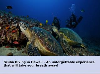 Hawaii Eco Divers – Experienced Guides in Oahu