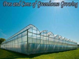 Merits and demerits of greenhouse cultivation