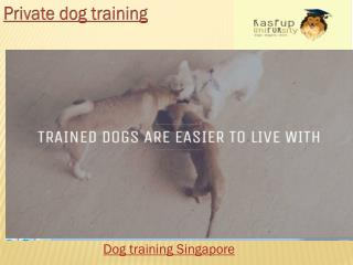 Singapore Dog Training