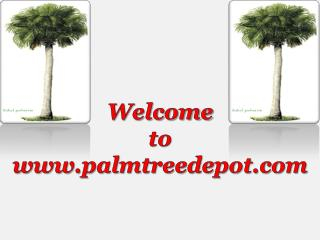 Palm Tree Depot in North Carolina