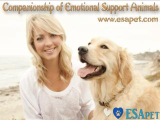 Companionship Of Emotional Support Animals