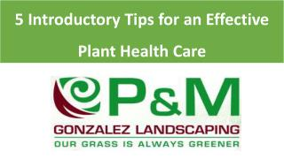 5 Introductory Tips for an Effective Plant Health Care