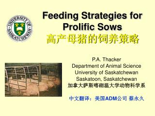 Feeding Strategies for Prolific Sows