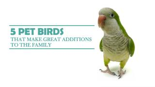Pet Birds That Make Great Additions To The Family