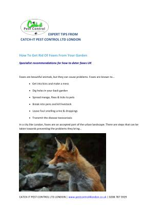 How To Get Rid Of Foxes From Your Garden