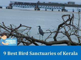 9 Best Bird Sanctuaries of Kerala