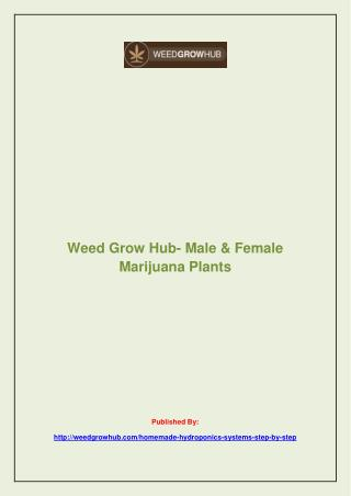 Male & Female Marijuana Plants