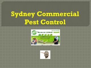 Best Sydney Commercial Pest Control