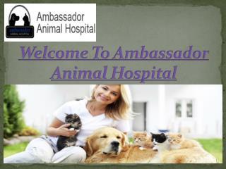 Ambassador Animal Hospital- Finest veterinarian amenities in windsor