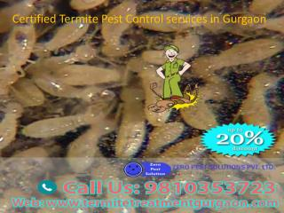 Certified Termite Pest Control services in Gurgaon Call 9810353723