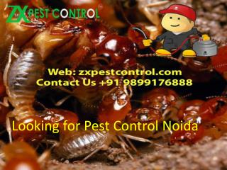 Looking for Pest Control Noida Call us at  91 9899176888