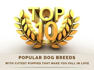 10 Popular Dog Breeds with Cutest Puppies that Make You Fall in Love