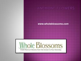 Anemone Flowers - www.wholeblossoms.com