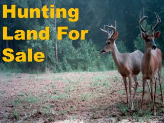 Large And Different Hunting Land For Sale