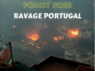 Forest fires ravage Portugal
