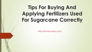 Tips For Buying And Applying Fertilizers Used For Sugarcane Correctly