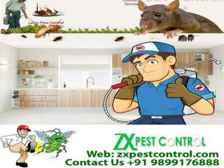 ZX Pest Control Noida, India call us at 9899176888
