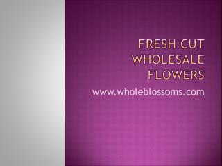 Fresh Cut Wholesale Flowers - www.wholeblossoms.com