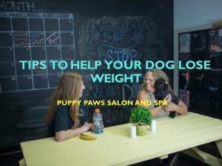 Tips To Help Your Dog Lose Weight