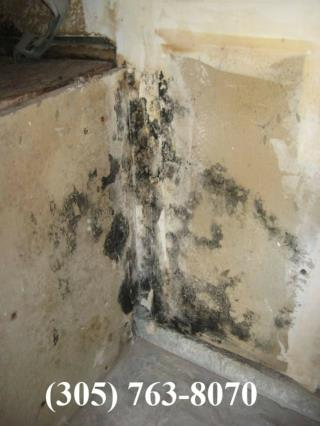 Black Mold Testing North Miami Beach
