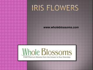 Iris Flowers - www.wholeblossoms.com