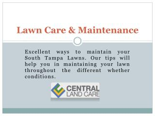 South tampa lawn care|Lawn service Tampa