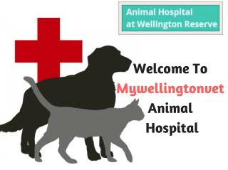 Veterinary Clinic in Wellington Area