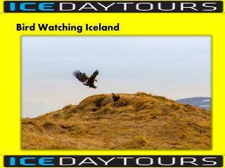 Bird Watching Iceland
