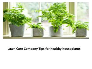 Lawn Care Company Tips for healthy houseplants
