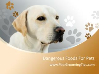 Dangerous Foods For Pets