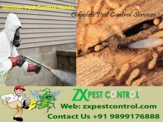 Termite, Pest Control Noida Call 9899176888