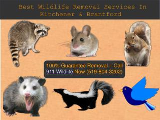 Wildlife Removal | Raccoon Removal Expert In Kitchener & Brantford