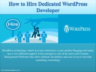 Explore how to hire dedicated wordpress developer