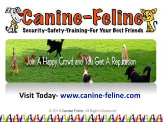 Dog and Cat Claw Caps   canine-feline.com