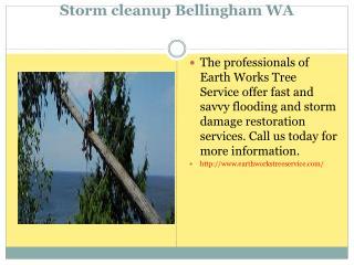 Tree Stump Removal WA