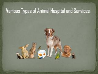 Various Types of Animal Hospital and Services