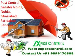 Insects or Pest Control Greater Noida, Noida, Ghaziabad, Faridabad Services call Us