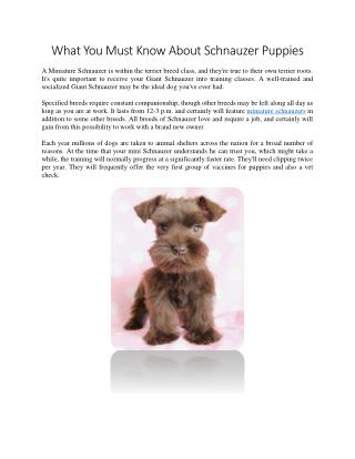 What You Must Know About Schnauzer Puppies