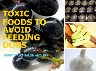 Toxic Foods To Avoid Feeding Dogs