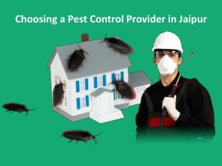 Choosing a Pest Control Provider in Jaipur